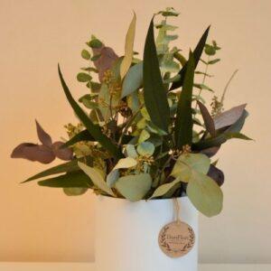 Eukaliptusz box