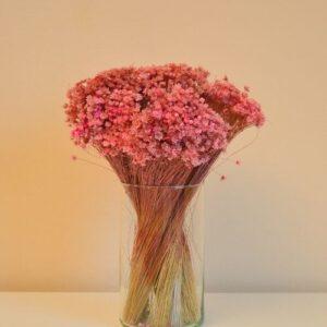 Glixia – rózsaszín