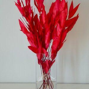 Piros Eukaliptusz