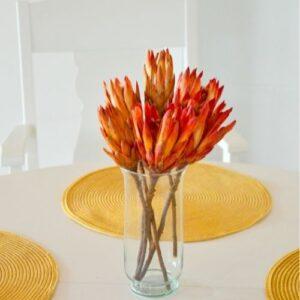 Piros protea
