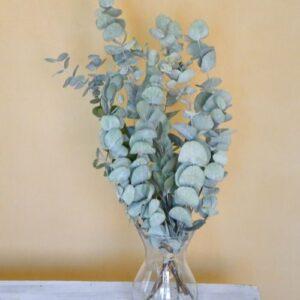 Eukaliptusz silver