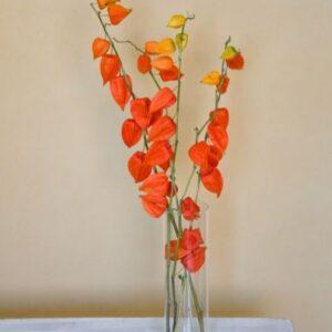 Lampion virág